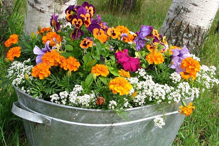 cvijece-lonac-bp