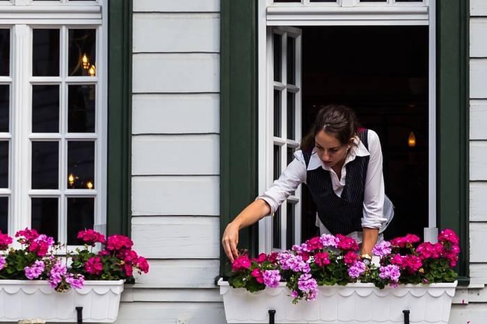 cvijece-na-prozoru-bp